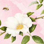 ape e rosa